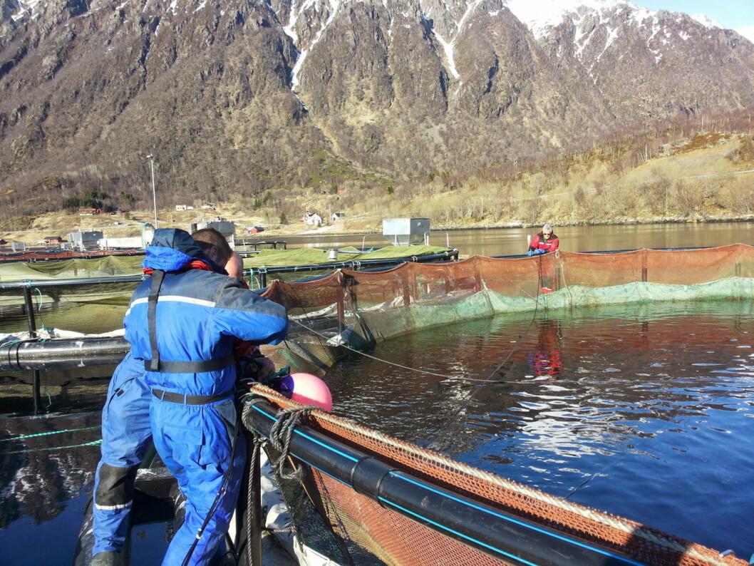 Jon Bertil Aakernes og Thomas Hellebust monterer Dropin hos Sigerfjord Fisk. (Foto: Aga/Sigerfjord Fisk)