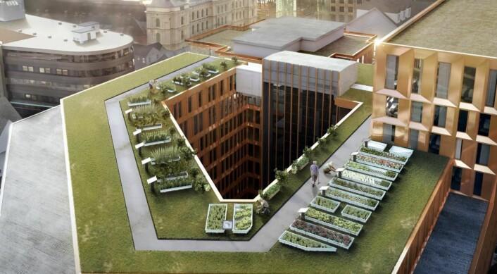 Norges største takåker på 200 kvadratmeter, GrowHub, på taket til Clarion Hotel The Hub. (Foto: Clarion Hotel)