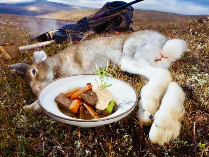 – I boken vil du finne retter med elg, rein, rådyr, hjort, hare (bildet), storfugl, rype og skalldyr/sjømat, opplyser Svein Jæger Hansen. (Foto: Peter Nagy)