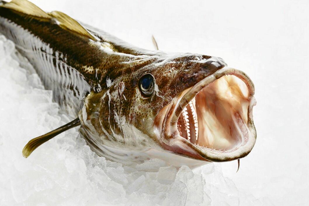 Illustrasjonsfoto: Marius Fiskum, Norges sjømatråd, arkiv