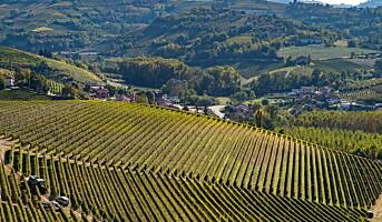 Viner fra vinhuset Prunotto