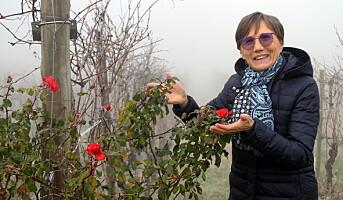 Vinproduksjon i samspill med naturen