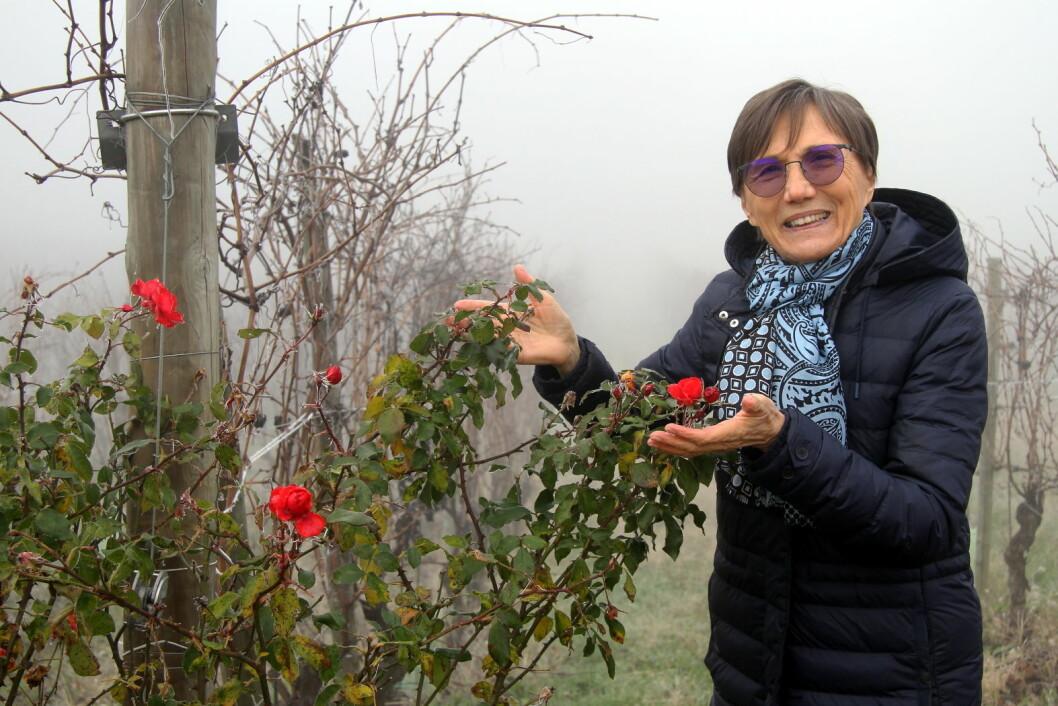 Maria Borio viser frem rosebuskene på vingården. (Foto: Morten Holt)