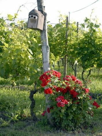 Fuglebur og rosebusker. (Foto: Cascina Castlét)