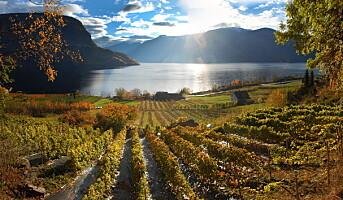 Norsk Vinskue arrangeres for tredje gang