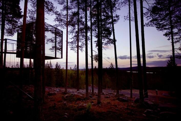 En av Tree Hotel sine unike hytter. (Foto: Tree Hotel)
