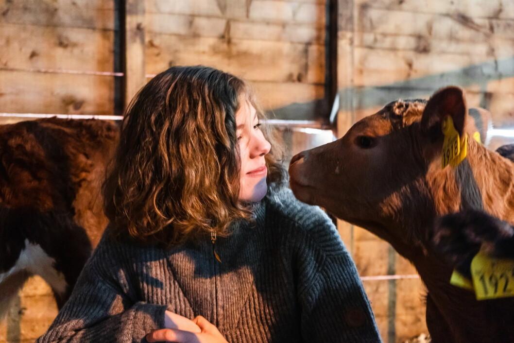 Mariann Solaas, daglig leder i Matfra.no med kalv på Ottestad gård i Kvæfjord. (Foto: Matfra.no)