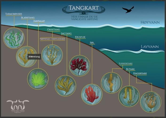Tangkartet er interaktivt, og fint å bruke i fjæra. (Foto: Ting med tang/Tangweb)