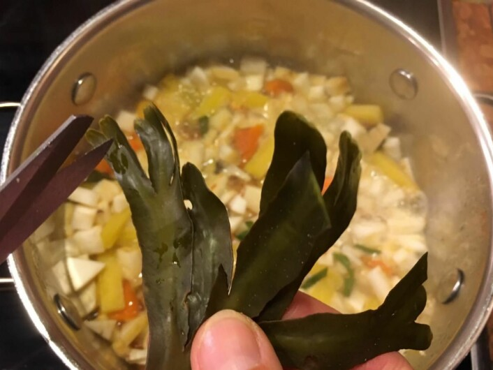 Suppe med tang er næringsrik og velsmakende. (Foto: Ting med tang/Tangweb)
