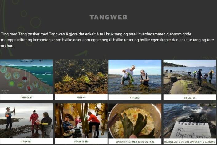 Tangweb gir deg det du trenger å vite om tang i fjæra. (Foto: Ting med tang/Tangweb)