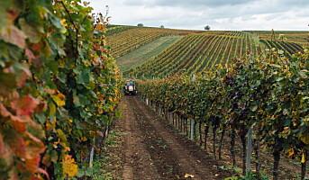 Importerer øl og vin fra Tsjekkia