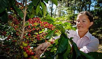 Kvinnelige kaffebønder bak kaffe som serveres på Choice-hotellene
