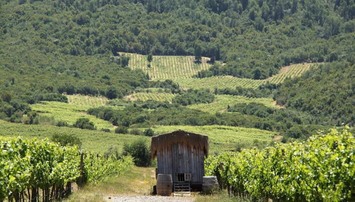 Emiliana Organic Vineyards. (Foto: Emiliana Organic Vineyards)