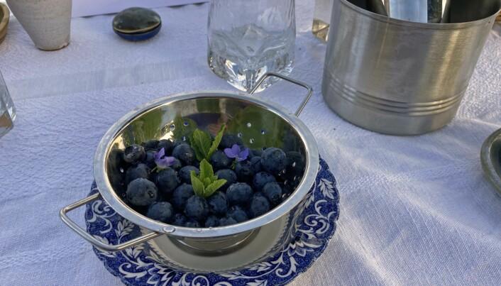 Blåbær og melk er tradisjonsdessert – bærene er ginmarinerte og serveres blant annet med fiolsukker fra egne beter. (Foto: Georg Mathisen)