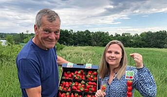 Nytt norsk jordbær har fått navn