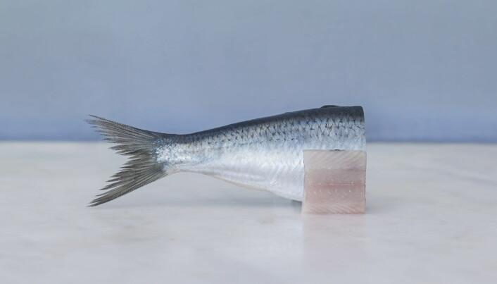 Søkelyset er satt på den norske matarven, når oppgaven til Årets kokk 2021 er satt. (Foto: Jim Hensley/Stiftelsen Norsk Gastronomi)