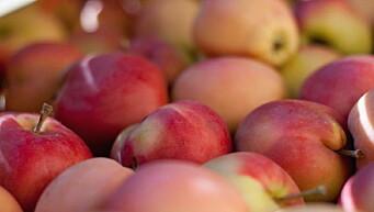 Epler på menyen