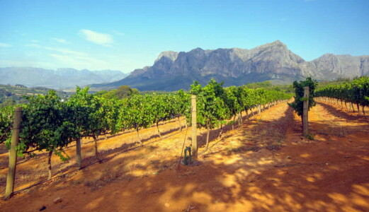 Cap Classique-metoden – Sør-Afrikas svar på champagnemetoden