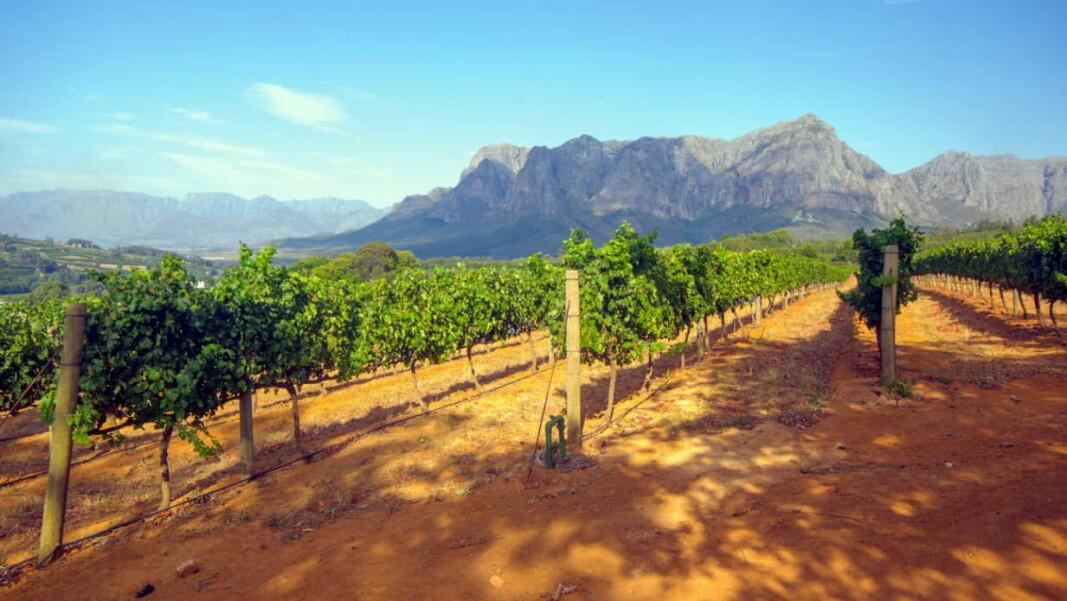 Vinmarker i Sør-Afrika. (Foto: Altia)