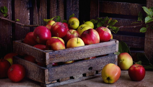 Svært god norsk eplesesong