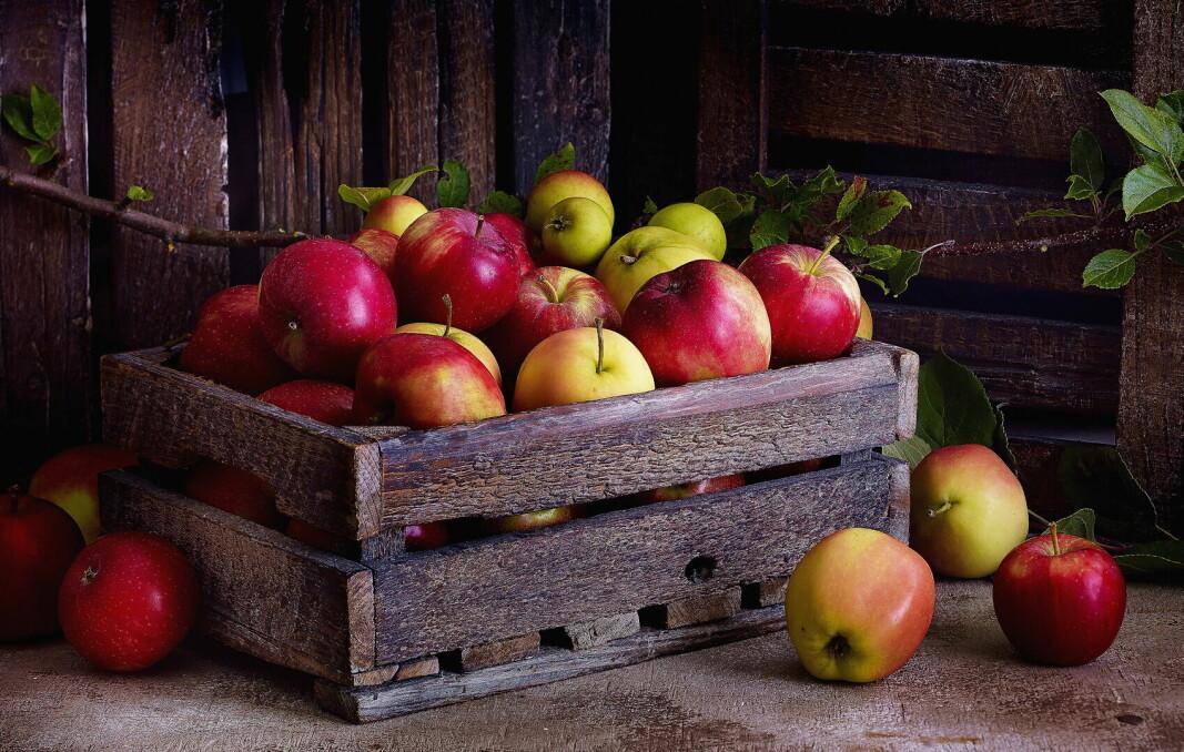 Norske epler har hatt en sunn oppvekst. Derfor smaker de så godt. (Foto: OFG)